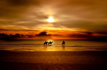 horse-silhouette-sunset-photography-wallpaper-2560x1600